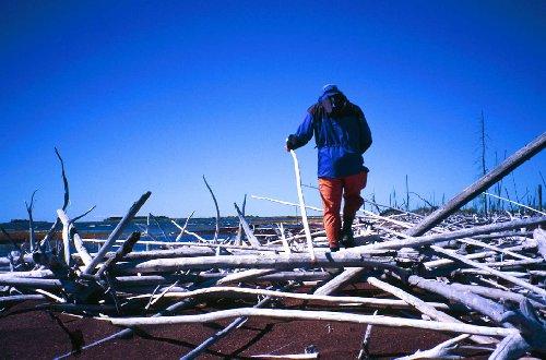 Logs like trreacherous pick-up sticks littered the sawdust beach