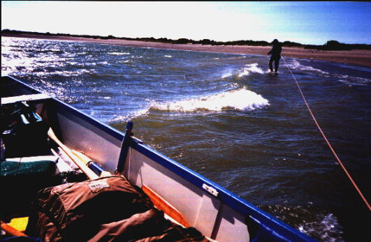 """""""Lining"""" the boat upwind--harder work than rowing!"""